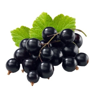 Black_Currant_DIY